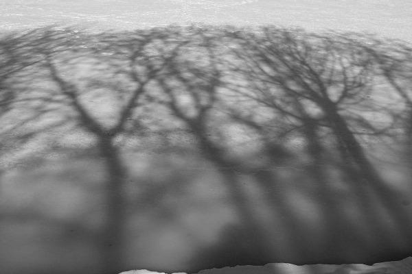 Frozen forest by Nicu Buculei. photoblog.nicubunu.ro. Licensed under a Creative Commons Attribution-Share Alike 3.0 License