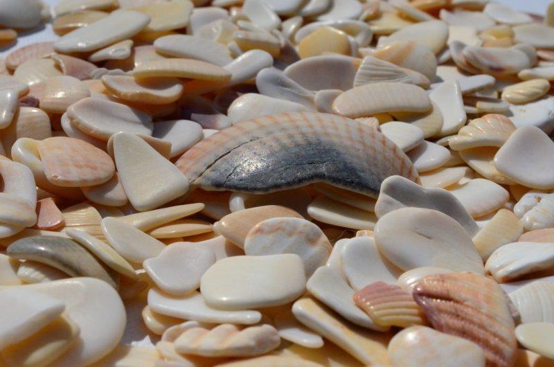 Beach fragments. Photo via Visual hunt