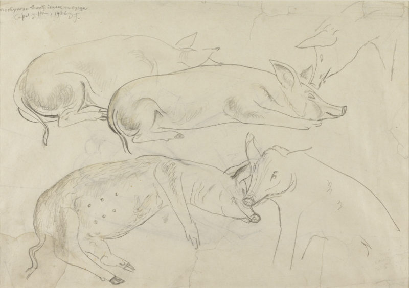 'Study of pigs', drawing 1926, by David Jones. © Tate, London, 2015. By kind permission of the Trustees of the David Jones Estate.
