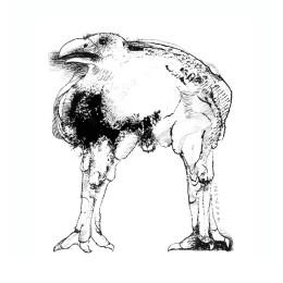 Crow - (C) Estate of Leonard Baskin