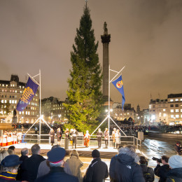 The 2014 Trafalgar Square Christmas Tree