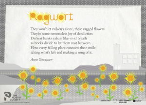 'Ragwort' by Anne Stevenson. Poster by The Poetry Society.