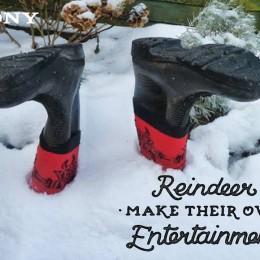 Reindeer make their own entertainment