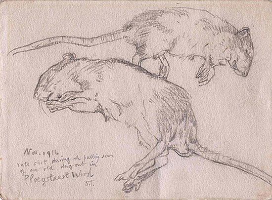 Drawing by David Jones inscribed 'November 1916 / Rats shot during the pulling down of an old dugout in Ploegsteert Wood'. By kind permission of the Trustees of the David Jones Estate and the Regimental Museum of the Royal Welch Fusiliers.