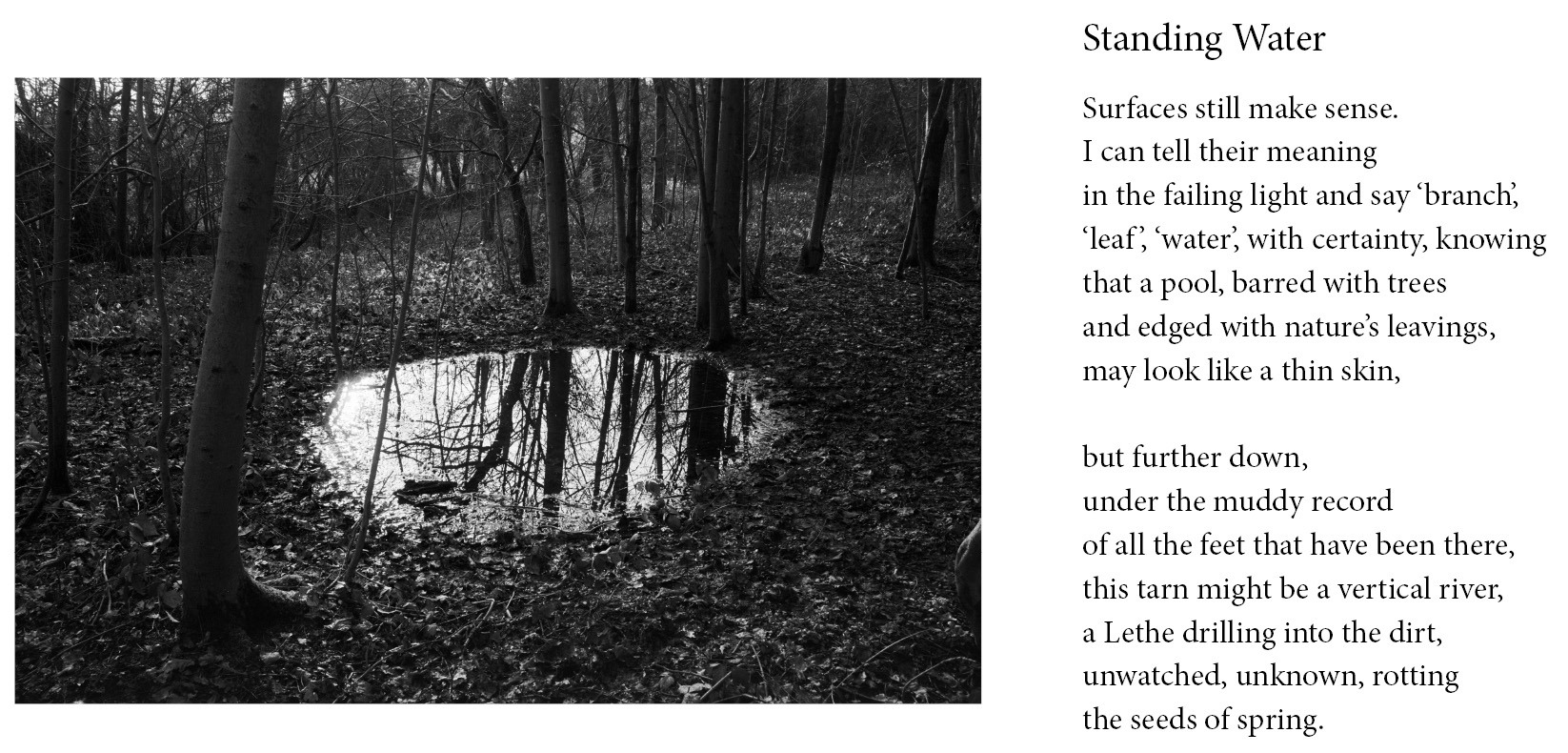 Standing Water from Tonewood by Lawrence Impey & Sue Rose, 2019.