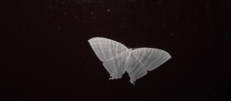 Moth-103-yercaud-salem-India