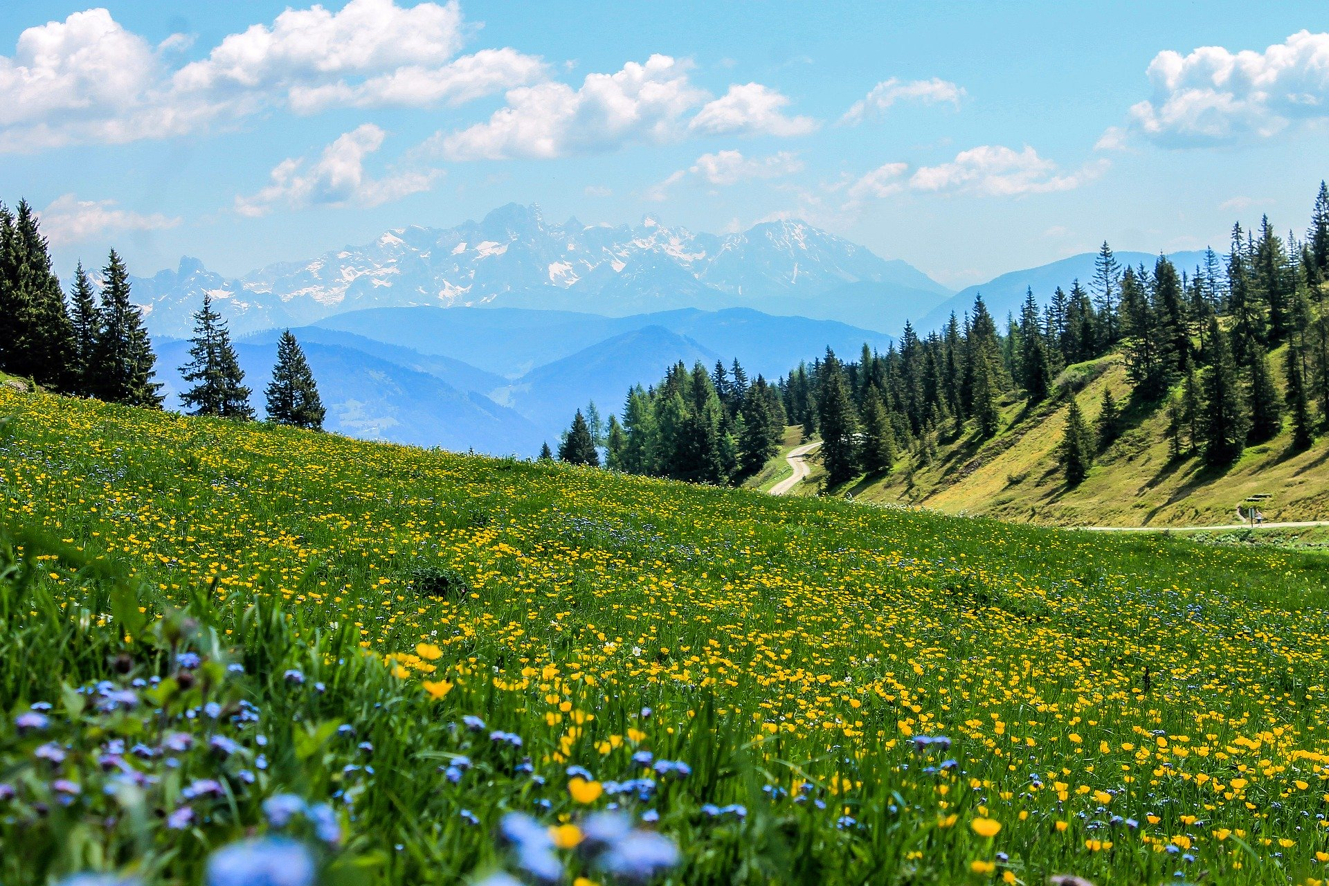 Photo of a meadow with yellow flowers in the foreground, and trees and mountains in the distance