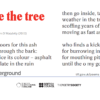 I go inside the tree by Jo Shapcott